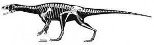 20110520083118panphagia-skeleton-new-dinosaur-300x88.jpg