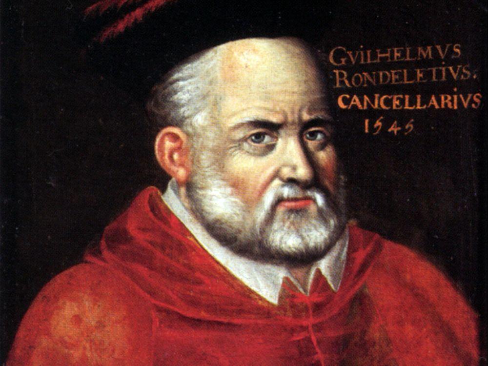 Guillaume-Rondelet-1507-1566.jpg