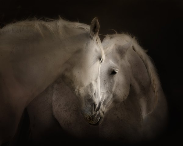 Wild Horses Exchanging Scents thumbnail