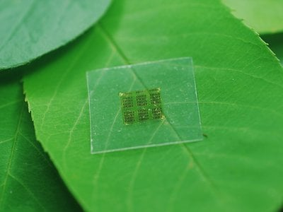 Cellulose nanofibril (CNF) chips made from wood could lead to flexible, biodegradable electronics that leach far less potentially toxic chemicals into the environment.