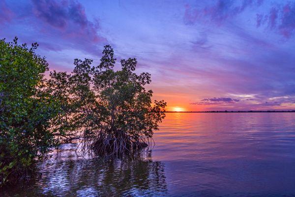 Mangrove Sunset thumbnail