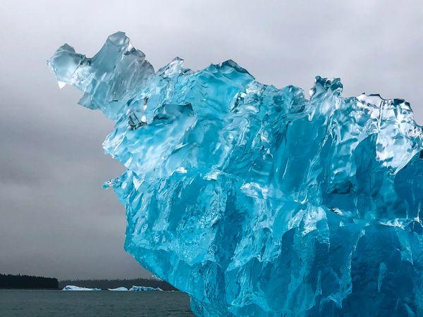 Iceberg and rainforest, Leconte Bay, Petersberg AK thumbnail