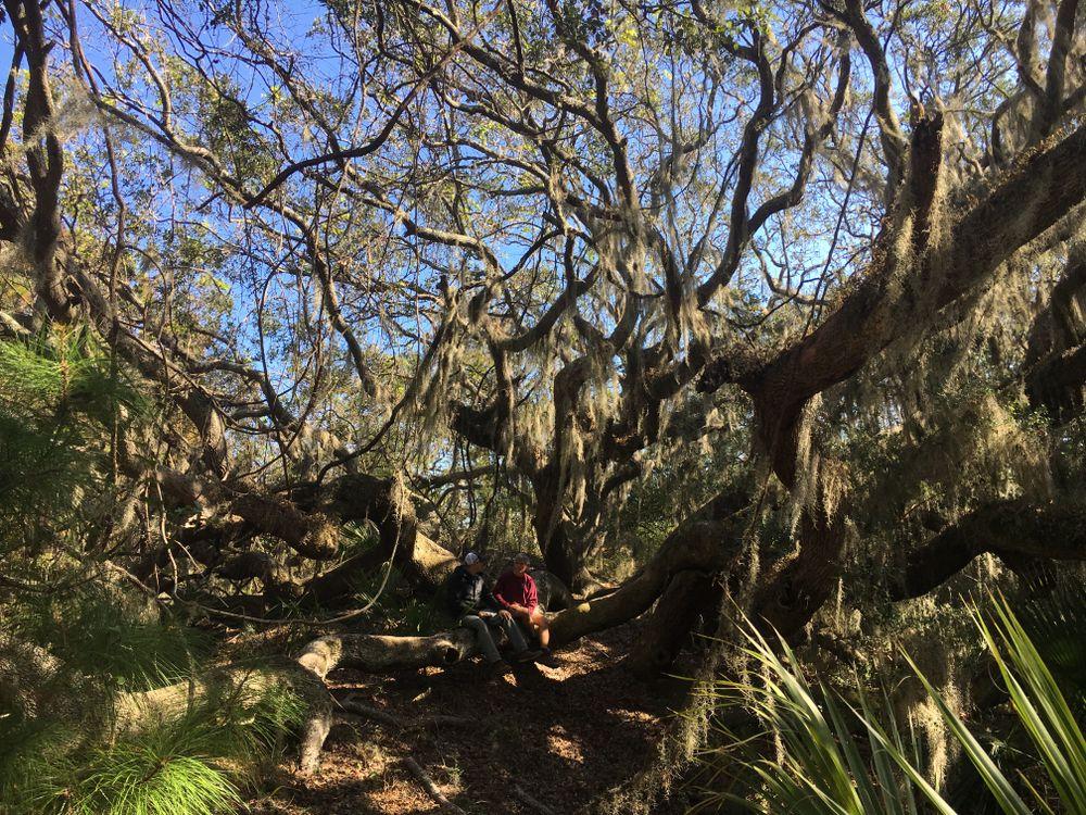 Brett and Fred Sitting in tree.JPG