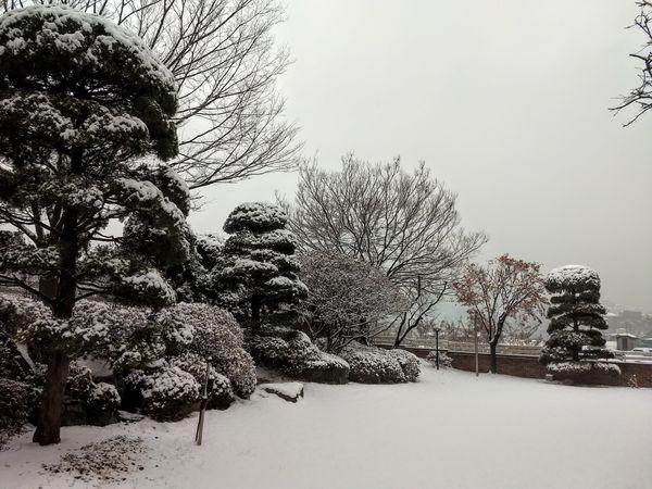 Untouched snow thumbnail
