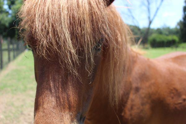 A Horse of a Similar Color thumbnail