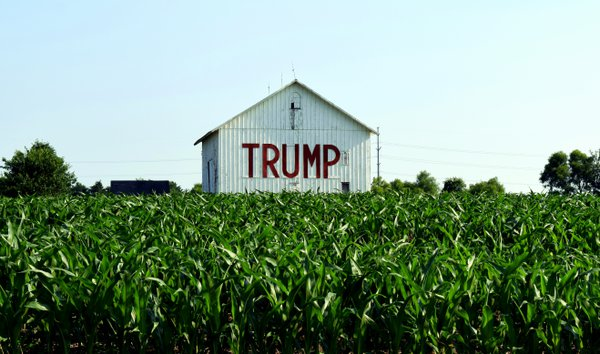 Election Year- Candidates are coming out of the corn. thumbnail