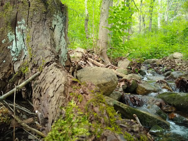 A Stump by the Stream thumbnail