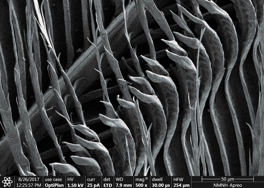 Black and white feathers under a microscope.