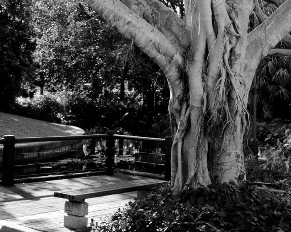Park in Brisbane, Australia thumbnail