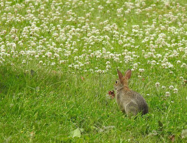 Bunny's World thumbnail