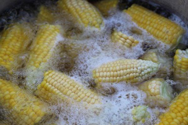 1st Corn of the Season thumbnail