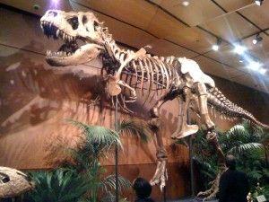 20110520083159Sampson-Tyrannosaurus-300x225.jpg