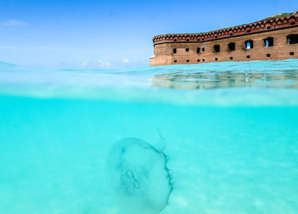 Jelly fish at Dry Tortugas National Park thumbnail