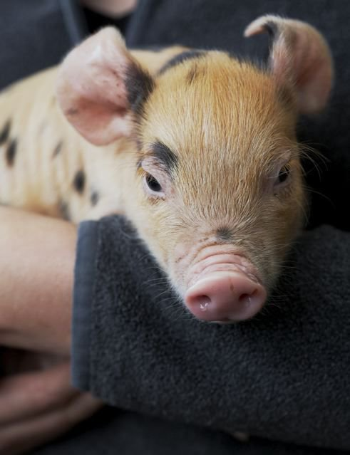 How One Family Helped Change the Way We Eat Ham