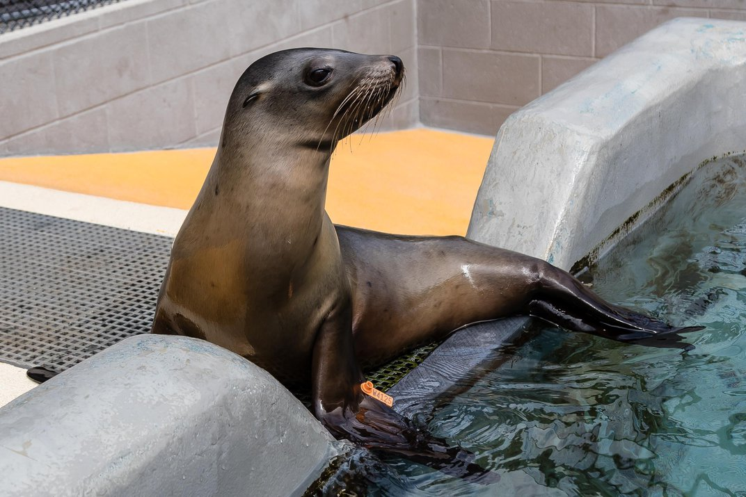Major Disease Outbreak Strikes California Sea Lions