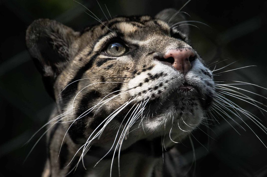 The face of a leopard.