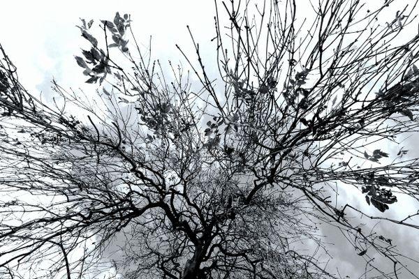 Under a Tree in Princes Street Gardens, Edinburgh thumbnail