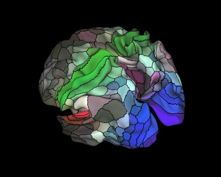 Brain Map 2