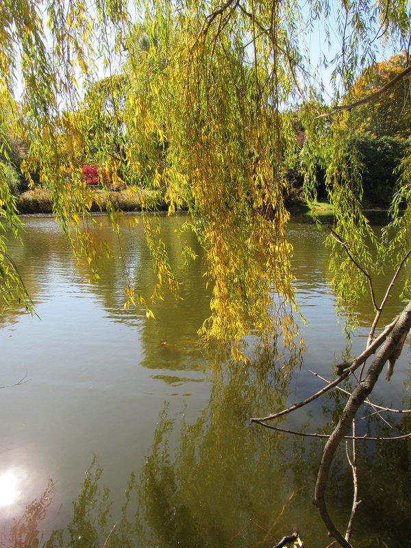Willow Pond In Mount Auburn Cemetery Cambridge MA thumbnail