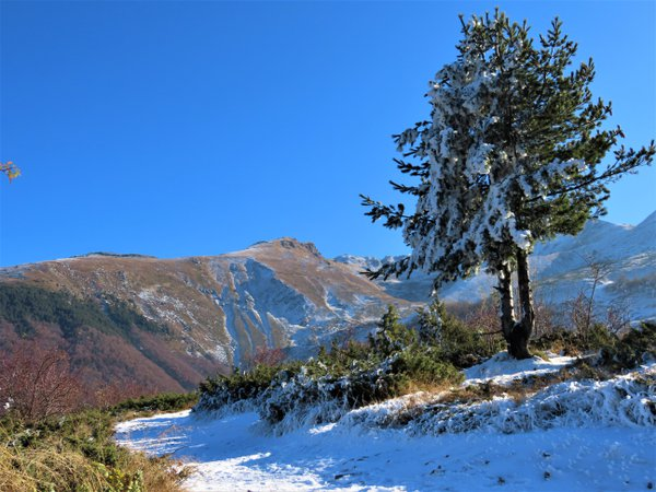 The first snow in Sharr mountains thumbnail