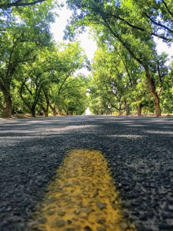 Pecan Orchard thumbnail