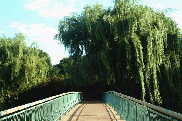 Bridge study #1 in botanic garden thumbnail