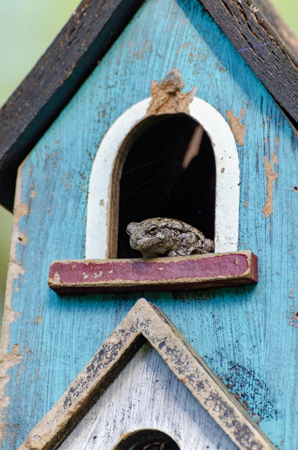 Home: Frog In A Birdhouse thumbnail