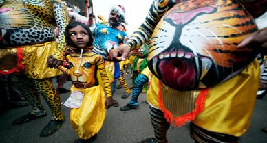 4765-tiger bellies-388.jpg