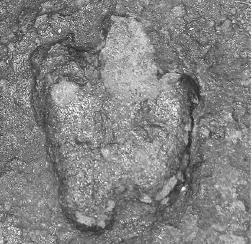 20110520083151minisauripus-track.jpg