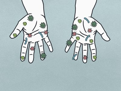 Our bodies carry many bacteria and fungi, not all of them harmful.