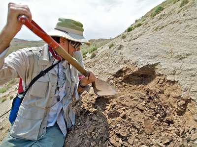 Smithsonian paleobiologist Scott Wing digs for plant fossils in Wyoming. (Tom Nash)