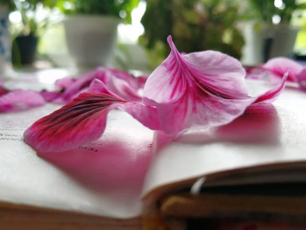 Flower petal thumbnail