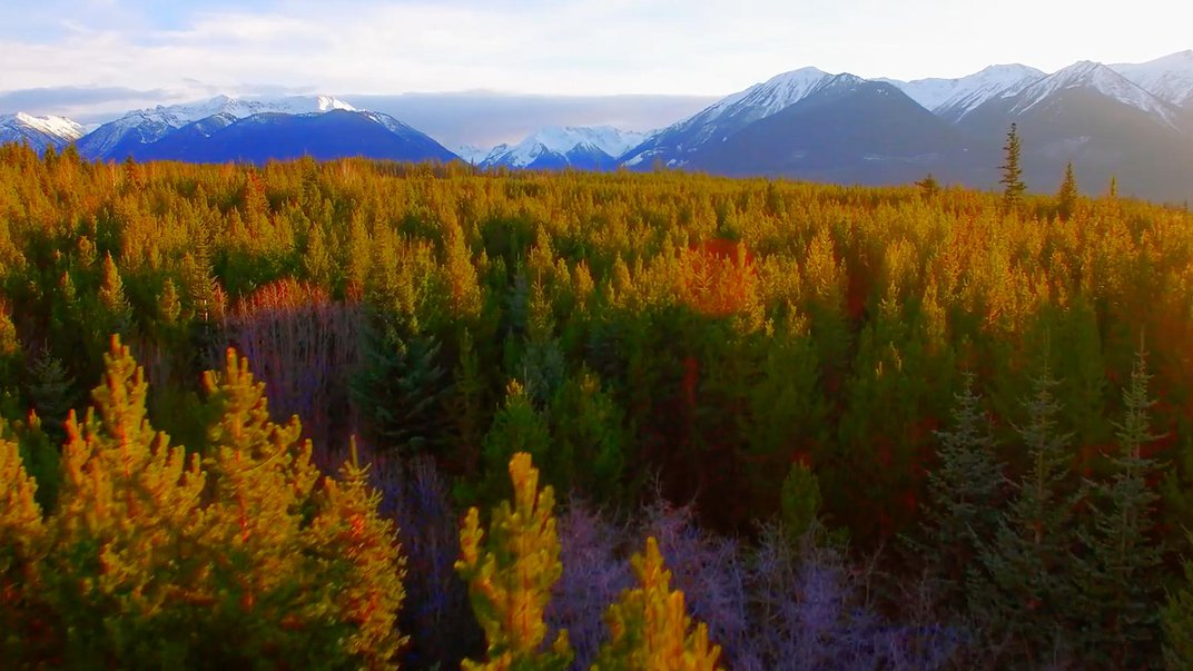 Colorful forest in fall near a mountain range