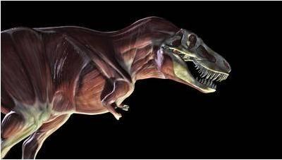 20110520083157tyrannosaurus-clash-dinosaurs.jpg