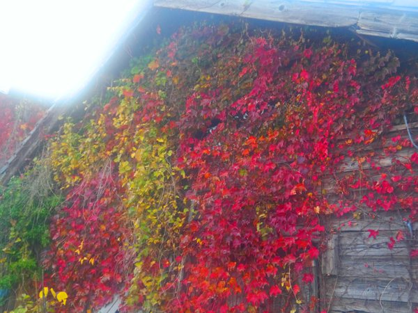 November Traditional Wooden House and leaves on phantom Isle thumbnail
