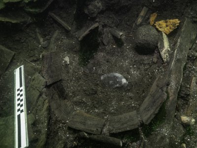 Archaeologists first spotted the sturgeon's bony plates near a barrel in the Gribshunden shipwreck.