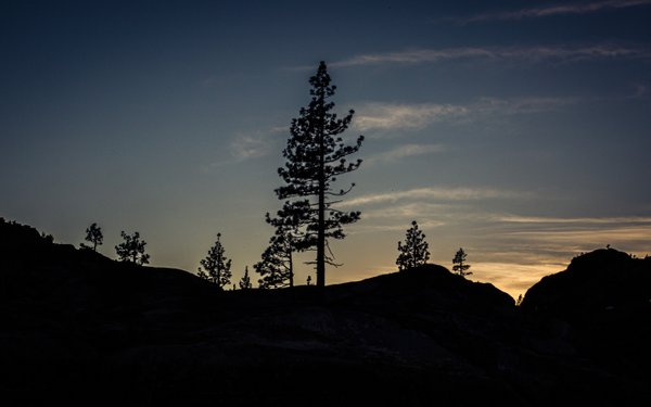Tree Silhouette at Sunset thumbnail