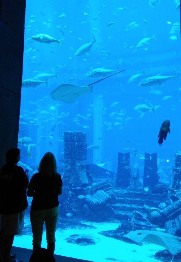 Admiring under water thumbnail