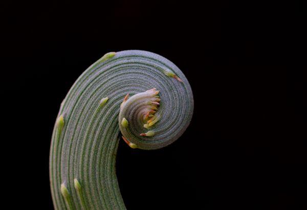 Fibonacci thumbnail