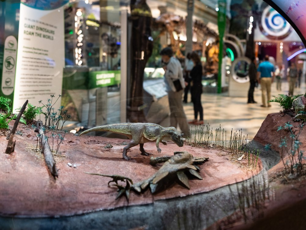 Miniature dinosaurs are staged in a scene from 150 million years ago while guests peruse another display showing the same species at full-size. (Smithsonian Institution)