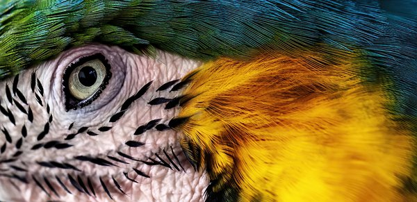 The Eye Of The Parrot thumbnail