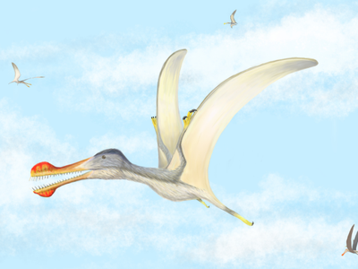 This illustration is an artist's interpretation of what a toothed pterosaur may have looked like 100 million years ago.