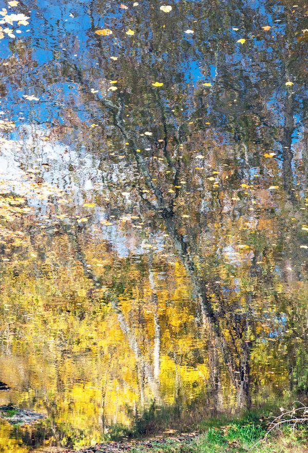 Leaves On Reflected Autumn Trees thumbnail