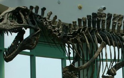 A reconstruction of Acrocanthosaurus at the North Carolina Museum of Natural Sciences in Raleigh, North Carolina, where this year's SVP reception was held.