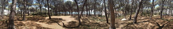 Follonica's pine forest thumbnail