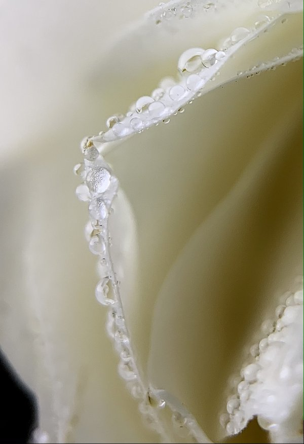 White Pearls thumbnail