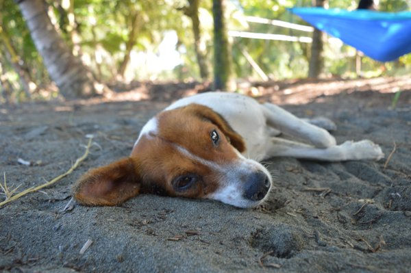 Sleepy dog thumbnail