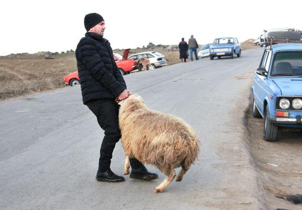 Sold sheep from an animal market thumbnail