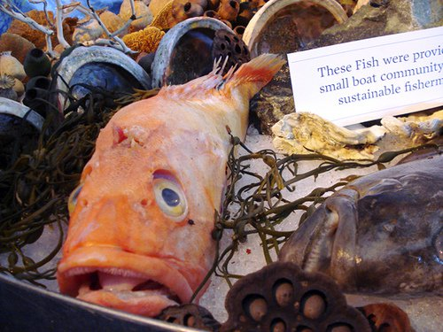 20110520090031fish-still-life2831007225_946f81af9e.jpg