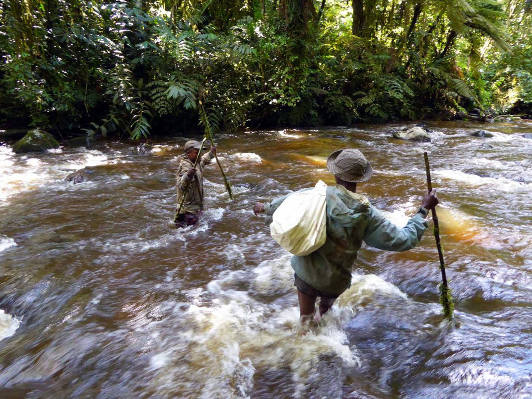 Two New Species of Semi-Aquatic Mice Identified in East African Rainforests
